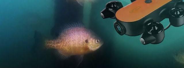 Geneinno T1 Underwater Drone Footage of Bluegill, Crappie, & Perch