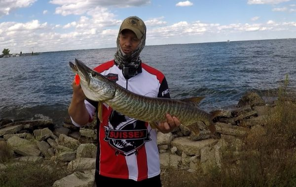 Tiger Musky at 9 Mile Pier Lake St. Clair